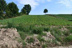 Niewłaściwa gospodarka na polach jedną z głównych przyczyn powstawania namulisk