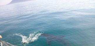 Agata w krainie rekinów