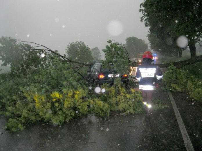 Powalone drzewo na samochód osobowy pod Miechowem